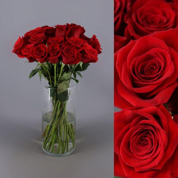 50 rosas freedom
