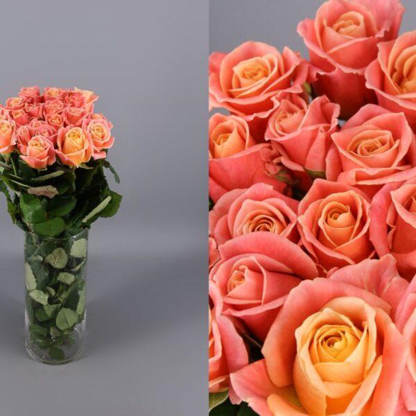 rosas naranja/rosas